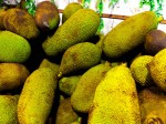 Lightroom 4 Slightly Sharpened With iPhone 4 Lens Correction But Without Any Effect Image Of Jackfruits