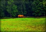Lightroom 4 Retouched Horse Grazing Image 01A