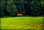 Lightroom 4 Retouched Horse Grazing Image 01B