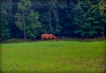 Lightroom 4 Retouched Horse Grazing Image 01D
