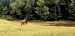Lightroom 4 Retouched Horse Grazing Image 02A