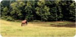 Lightroom 4 Retouched Horse Grazing Image 02C