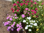 Original iPhone 4 Photo Of Colorful Flower Bed