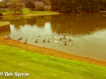 Lightroom 4 Retouched iPhone 5 Photo Of Geese Image 02-01