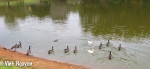 Lightroom 4 Retouched iPhone 5 Photo Of Geese Image 02-02
