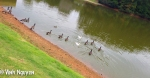 Lightroom 4 Retouched iPhone 5 Photo Of Geese Image 02-03