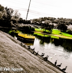 Lightroom 4 Retouched iPhone 5 Photo Of Geese Image 01-03