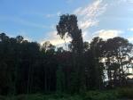 Original iPhone Picture Of Random Trees In Nature
